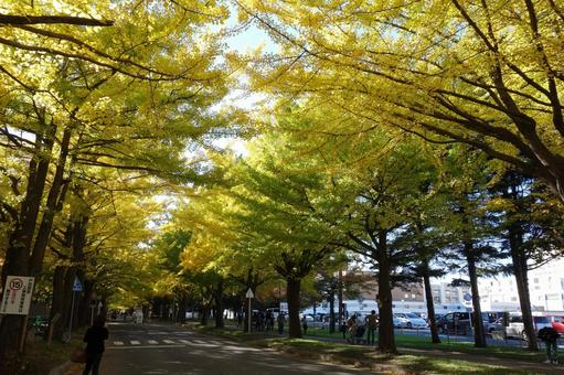 Hokkaido University 5
