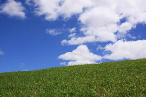 Background material of green and refreshing sky