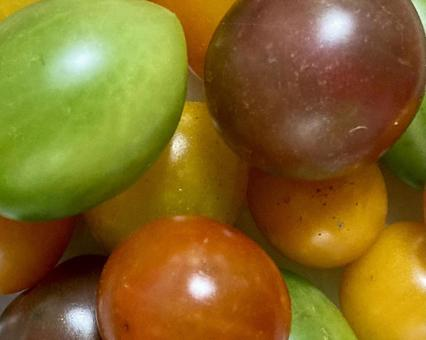 Color tomatoes (5)