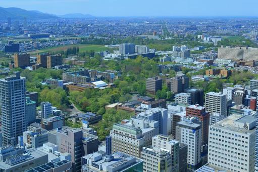 Fresh green Hokkaido University (from JR Tower)