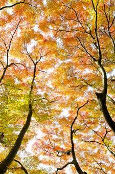 Autumn scenery 4