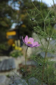 Flower 27 Pink single flower