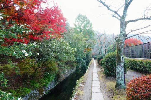 Autumn Kyoto Philosophy Road Landscape