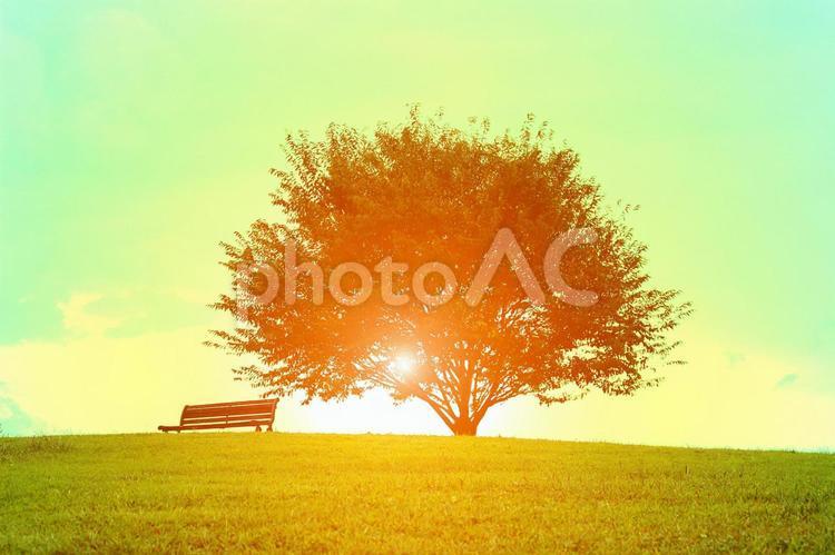 草原に光る木漏れ日の写真