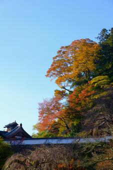 Autumn leaves at Hase-dera Temple in Nara Prefecture