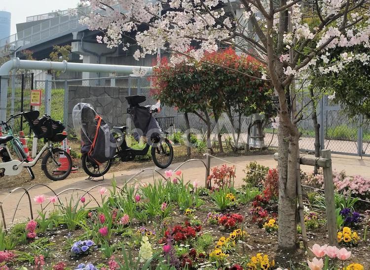 子供乗せ自転車と春の風景の写真