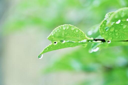 잎의 물방울