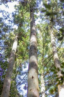 숲의 나뭇잎 사이로 비치는 햇빛 2
