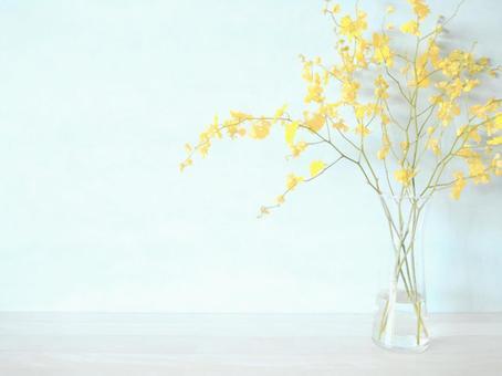 與花同住 秋花 軟文心蘭