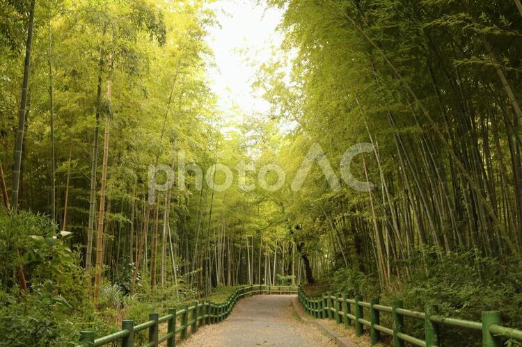 愛知 緑地 公園 竹林 竹 緑 夏 日中 ハイキング 散策 小路の写真