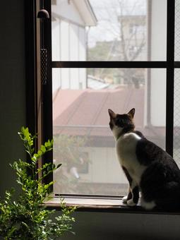 Wind chimes and cat 02