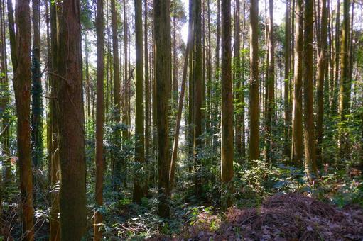산길의 풍경 나무