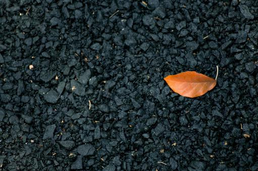 A leaf that fell on the road