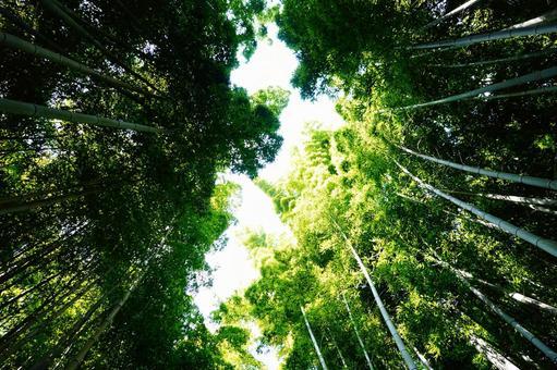 Kyoto Arashiyama Sagano Bamboo forest small diameter shining light