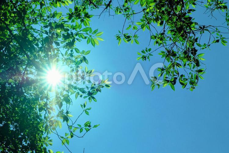 木々の間から差し込む光と青空 背景の写真