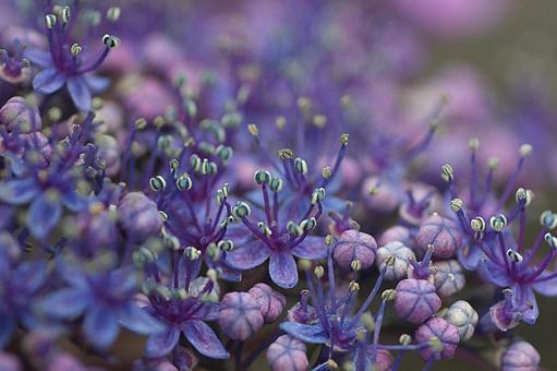 크아 지사이의 작은 꽃들이