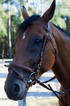 Horseback riding 64