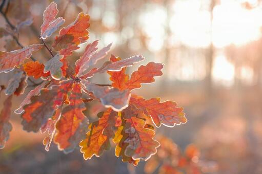 Autumn leaves leaves 1