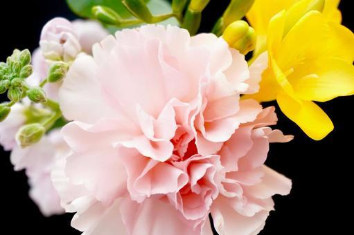 카네이션 꽃 검정 백