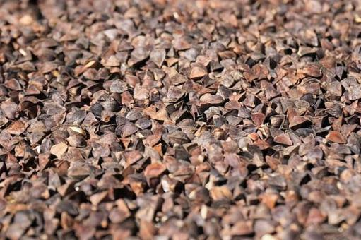 Buckwheat fruit close-up