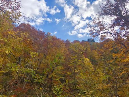 Akita's autumn leaves blue sky