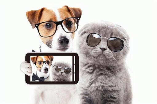 Jack Russell Terrier of glasses and Scottish Fold of sunglasses