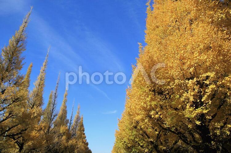 明治神宮外苑の紅葉の写真