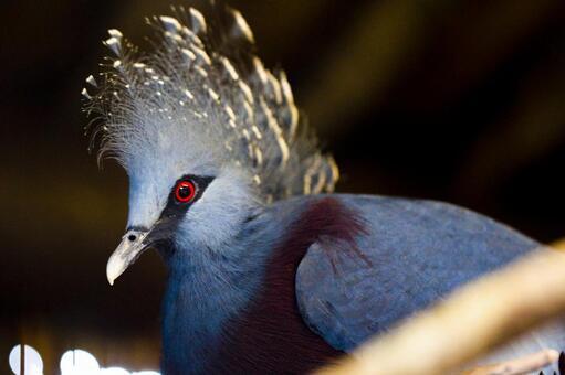 Tropical beautiful bird