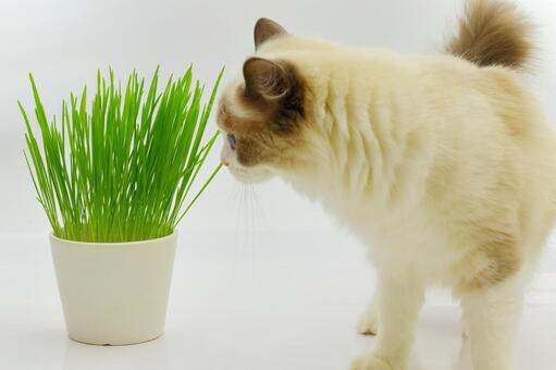 猫草 헝겊 인형