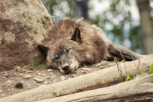 Asahiyama Zoo_Fox