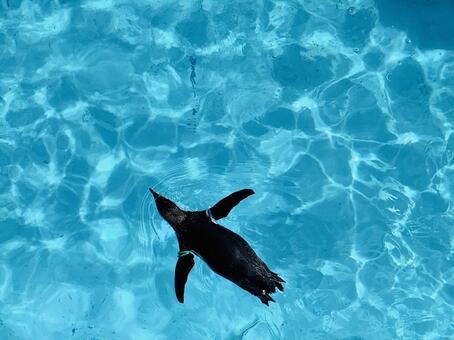 One penguin swimming under the aquarium under