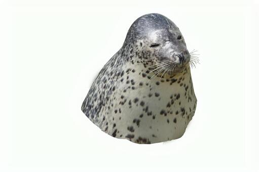 Seal (clipping)