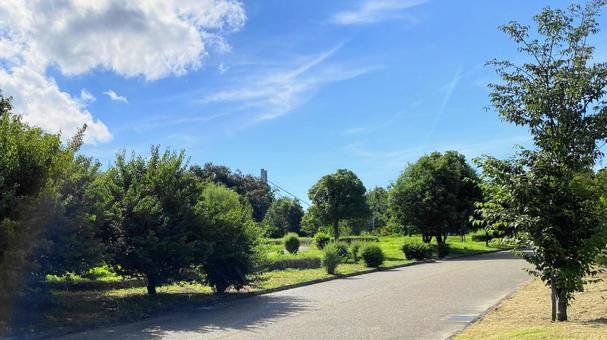 Park and blue sky