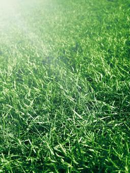 Sunny lawn