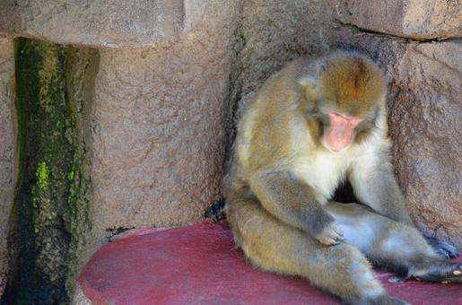 원숭이 3