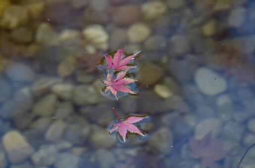 Fallen leaves of the pond