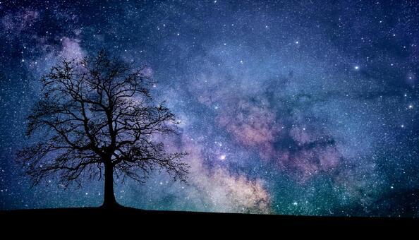 夢幻般的星空和樹木