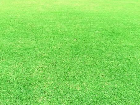 Texture _ natural grass