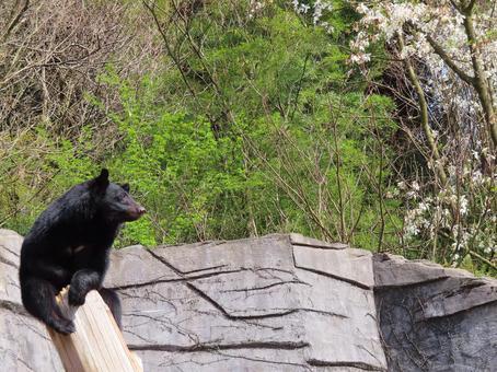곰의 꽃놀이