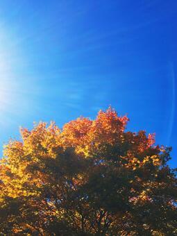 Autumn leaves forest bath stock photos e_20