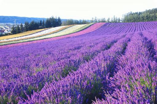 비 에이의 꽃밭