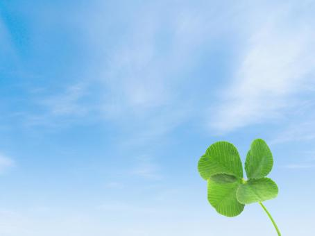 Real four-leaf clover and blue sky