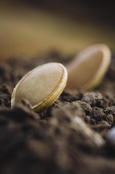 흙 위에 씨앗 8