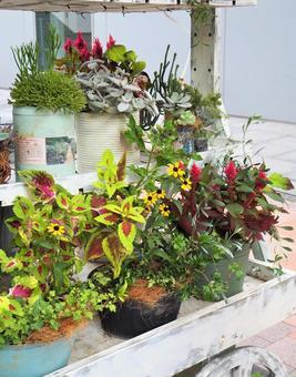 Cute mini garden in the city [Shin-Yokohama]
