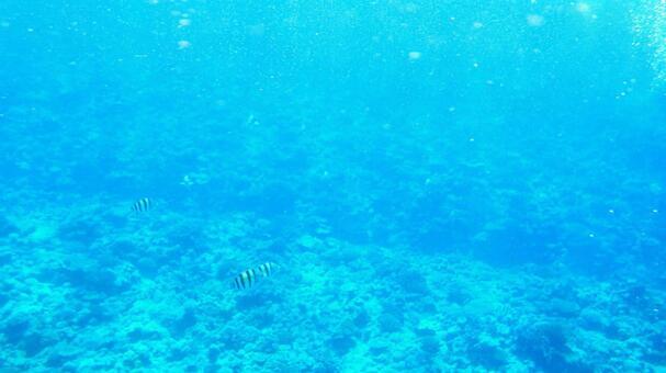 오키나와 수중 사진 37