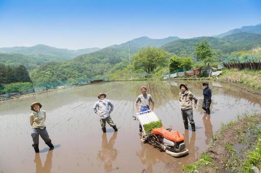 日本2的水稻种植