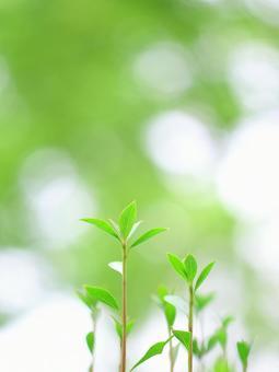 Fresh green leaves
