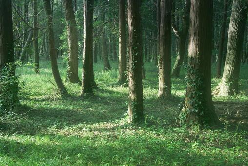 Trees_Forest_69