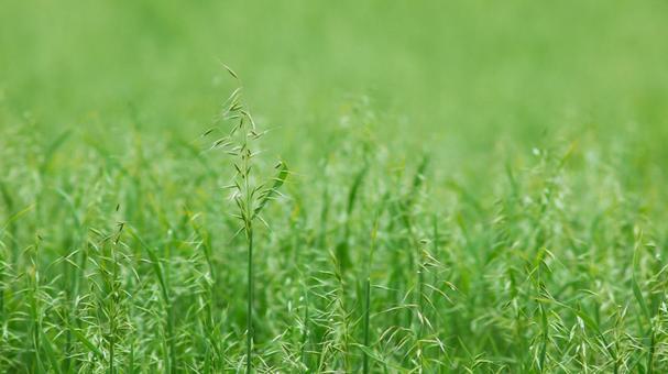 목초의 배경 소재