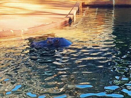 하마 동물원의 동물